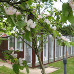 Martlets Cattery, East Sussex