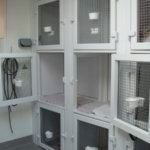 Mayhew Animal Home, London