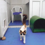 Southdown Cattery, Nottinghamshire
