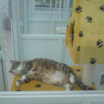 Star Cattery, Surrey