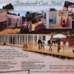 Beechcroft Cats Hotel, Caerphilly