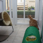 thecatnap Boarding Cattery, Gloucestershire