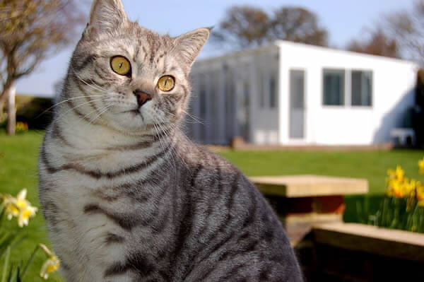 Telscombe Cattery, East Sussex