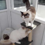 uPVC Cattery for Ladbybird Cattery, Essex