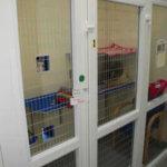 uPVC Cattery, Blue Cross, Bromsgrove