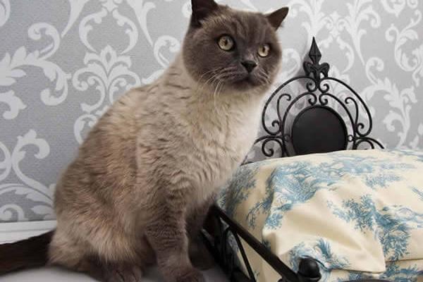 aristocat1