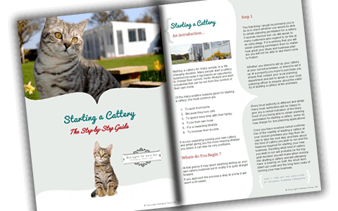 Download your copy of Starting a Cattery Business