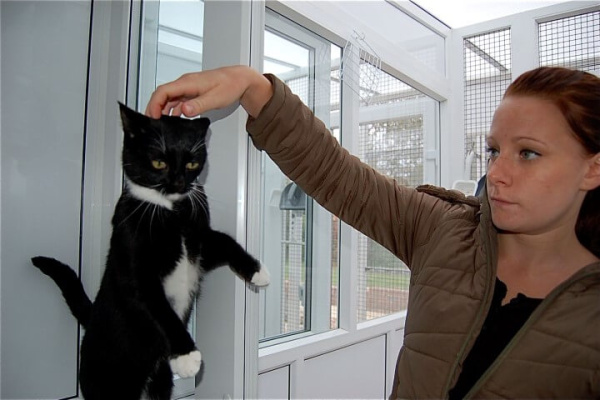 telscombe-cattery-11-small