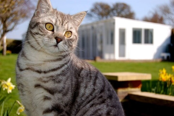 telscombe-cattery-6-small