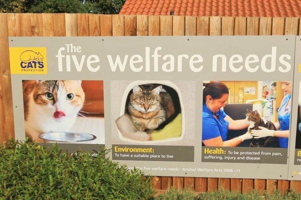 The Welfare Needs